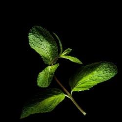 Capsules Plantui - Herbes aromatiques - Menthe ProCouteaux