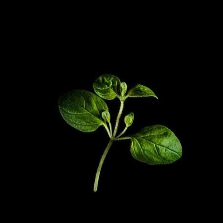 Capsules Plantui - Herbes aromatiques - Origan ProCouteaux