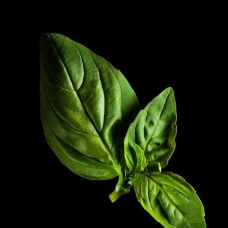 Capsules Plantui - Herbes aromatiques - Basilic Citron ProCouteaux