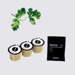Capsules Plantui - Herbes aromatiques - Coriandre